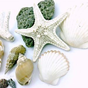 Seashells from Mermaid Range