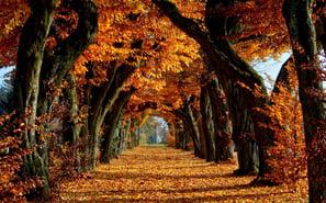 nature-trees-autumn-leaves-path-fall-avenue-orange-leaf